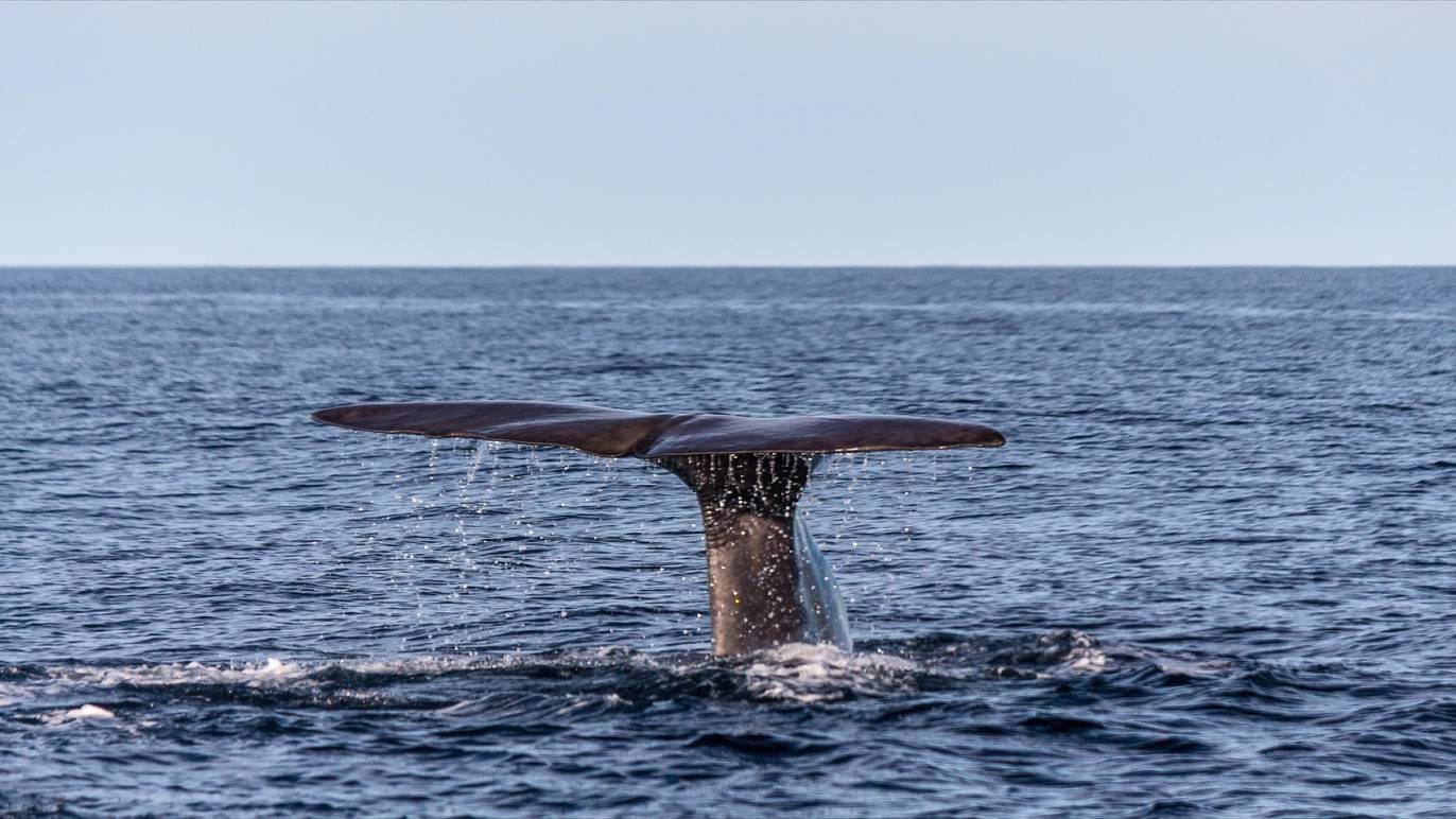 whale watching on the Great Ocean Road RV road trip